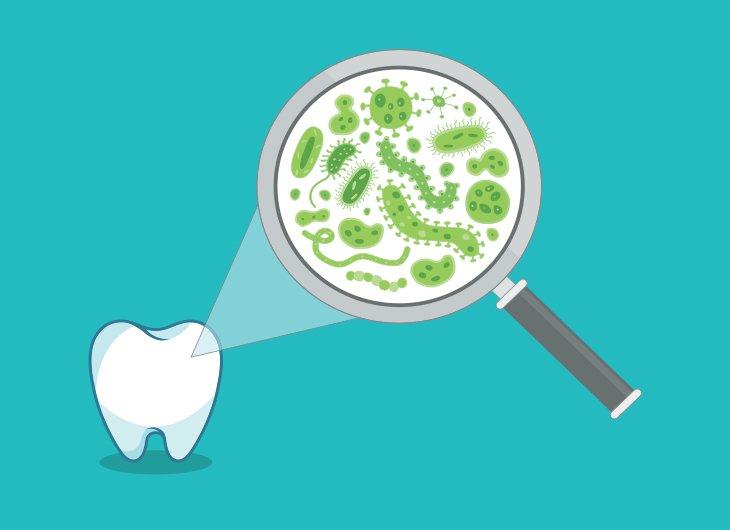 oral microbiomes what bacteria lives in a human mouth