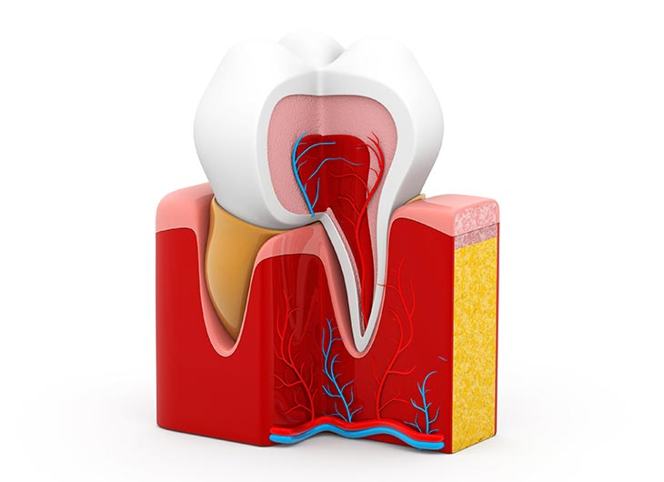 what happens in a root canal treatment feature image
